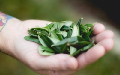 What To Know About Olive Leaf Tea: Answers To 7 Common Questions